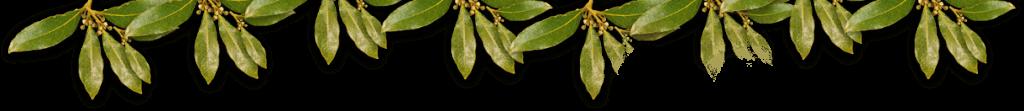 curcuma piperina offerta speciale
